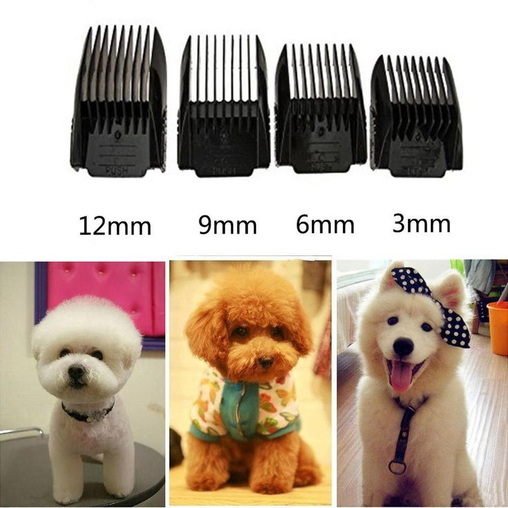 Electric Low Noise Animal Pet Dog Cat Hair Razor Grooming Clipper Trimmer Shaver at Banggood