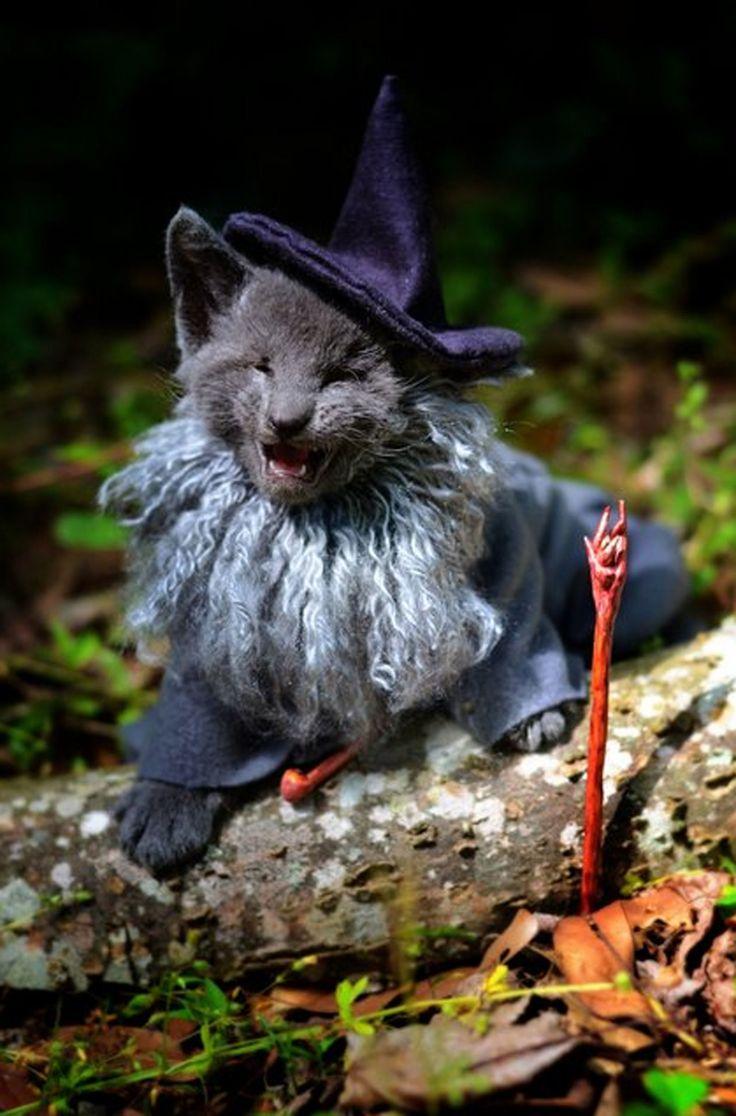 Best 20+ Kittens in costumes ideas on Pinterest | Kitten costumes ...