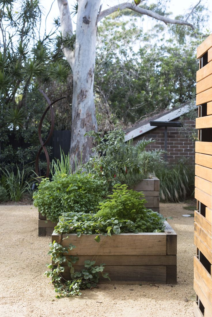 Veggie garden in timber planters