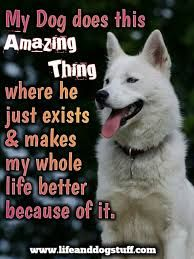 Image Result For Cute Dog Quotes For Instagram Best Funny Dog