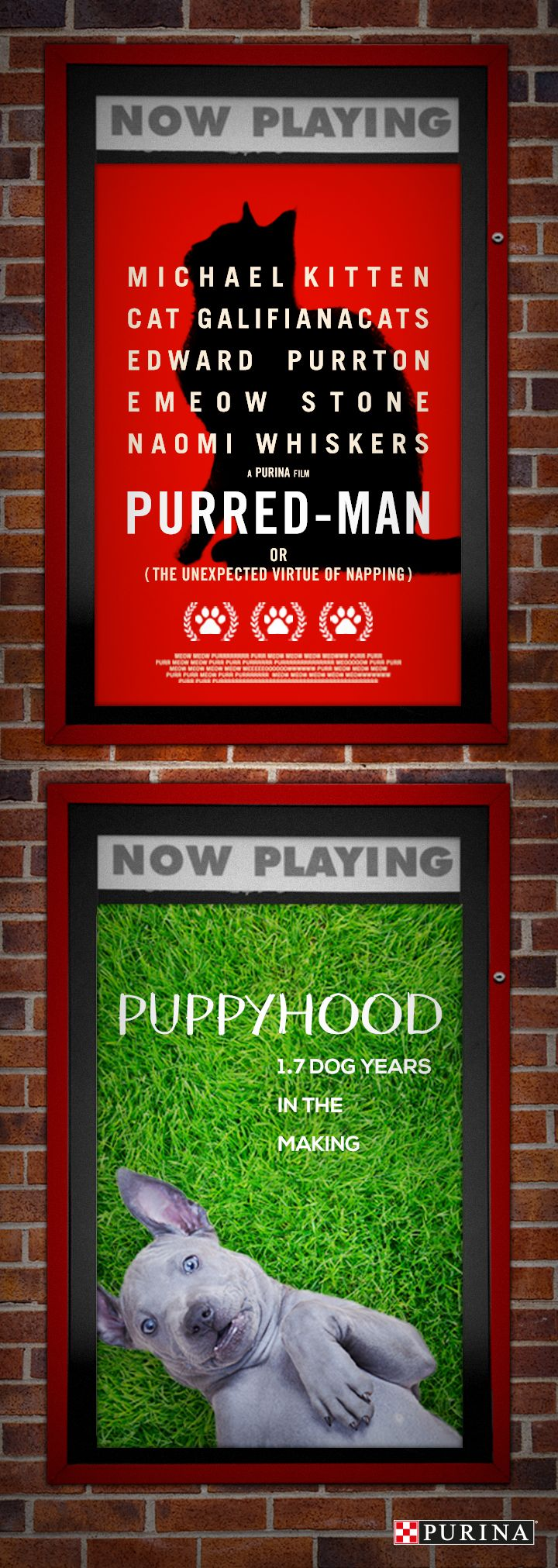 Looking for some new movies to watch? If you're a fan of cat humor and funny dogs, we've got you covered with these new films starring your favorite pets.