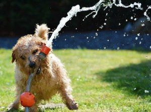 Summertime Fun with your dog(s)