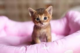 Resultado de imagen de gatos bebes recien nacidos