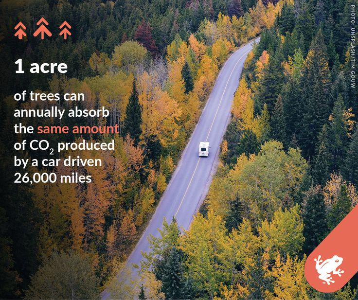 Among the many gifts forests give us is one we desperately need: help with slowing climate change. Trees capture greenhouse gases (GHGs) like carbon dioxide, preventing them from accumulating in the atmosphere and warming our planet.