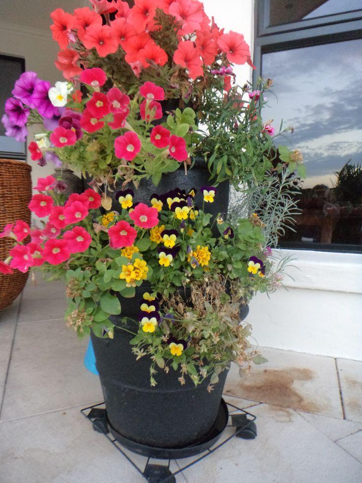 Adding colour to my over green garden.