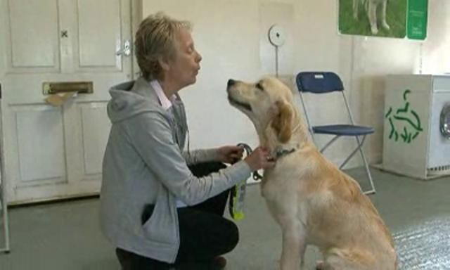 Dogs for the Disabled - Creating Partnerships by Dogs for the Disabled. A short film featuring four working dogs and their owners. www.dogsforthedisabled.org #dogs #assistancedogs #charity