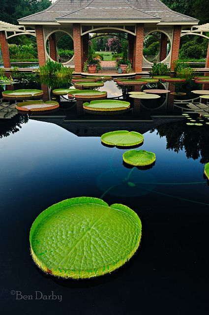 Botanical Gardens - Huntsville, Alabama by Ben Darby