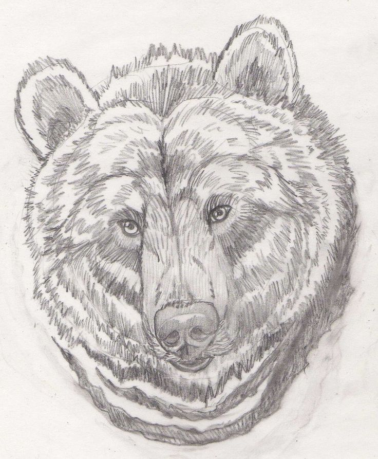 Bear Face Sketch | www.imgkid.com - The Image Kid Has It! Bear Face Drawing