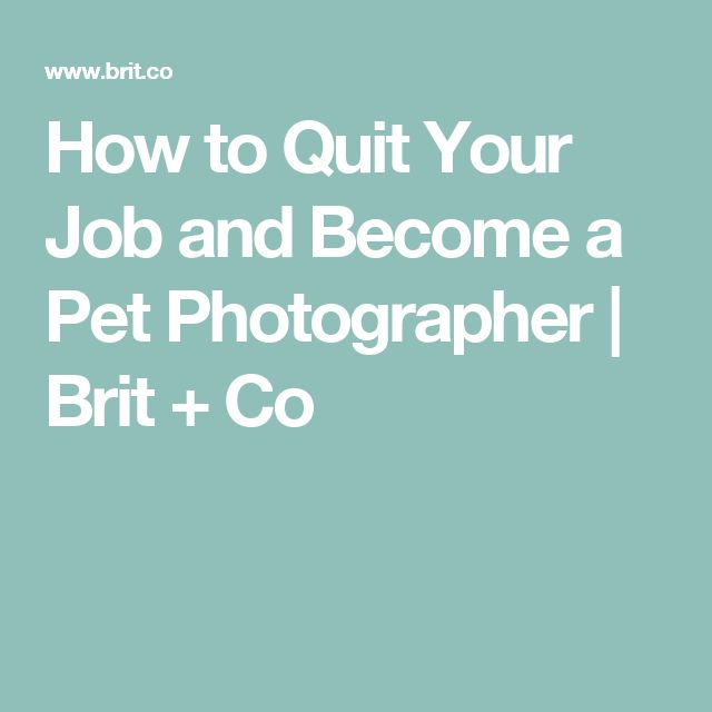How to Quit Your Job and Become a Pet Photographer | Brit + Co