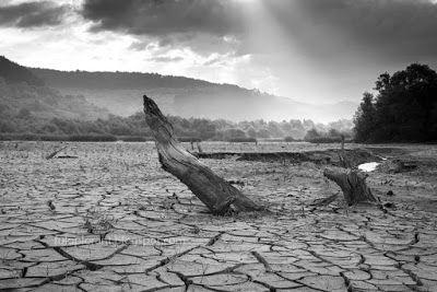 elemlámpa: Séta a tófenéken