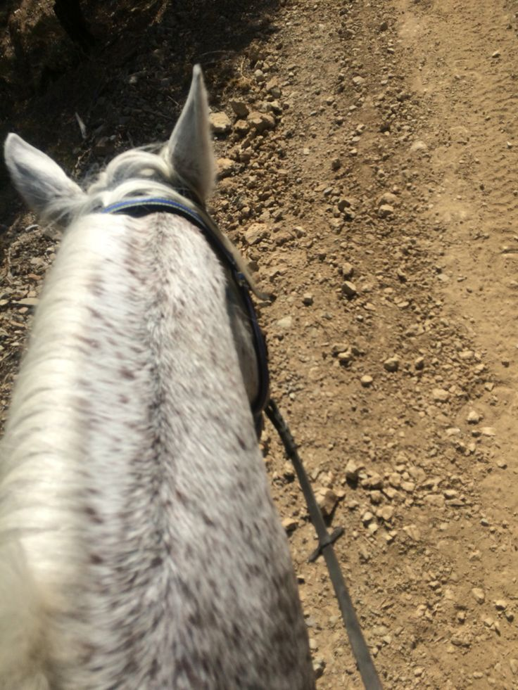 Velikopi, à Nice horse