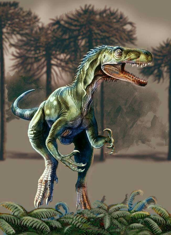 "Herrerasaurus was one of the earliest dinosaurs. Its name means ""Herrera's lizard"", after the rancher who discovered the first specimen. All known fossils of this carnivore have been discovered in rocks of Carnian age in northwestern Argentina."