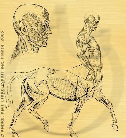 anatomie_auriak