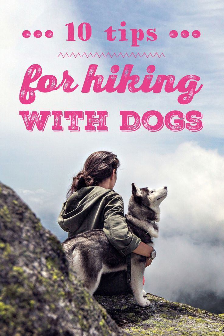 The best hiking partners are usually dogs!