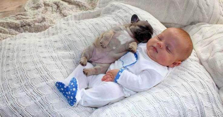 Τα κουτάβια - γενικότερα τα σκυλιά - πάντα ψάχνουν ένα ζεστό και μαλακό μέρος για να κοιμηθούν. Τις περισσότερες φορές η αγκαλιά μας και ακόμα περισσότερο το ζεστό κορμάκι ενός ανθρώπινου μωρού είναι ότι καλύτερο. Δείτε φωτογραφίες που θα σας κάνουν να λιώσετε από αγάπη και τρυφερότητα.