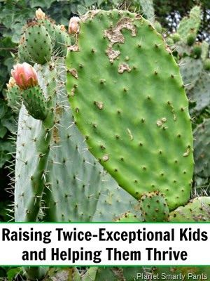 Helping Twice Exceptional Kids Thrive