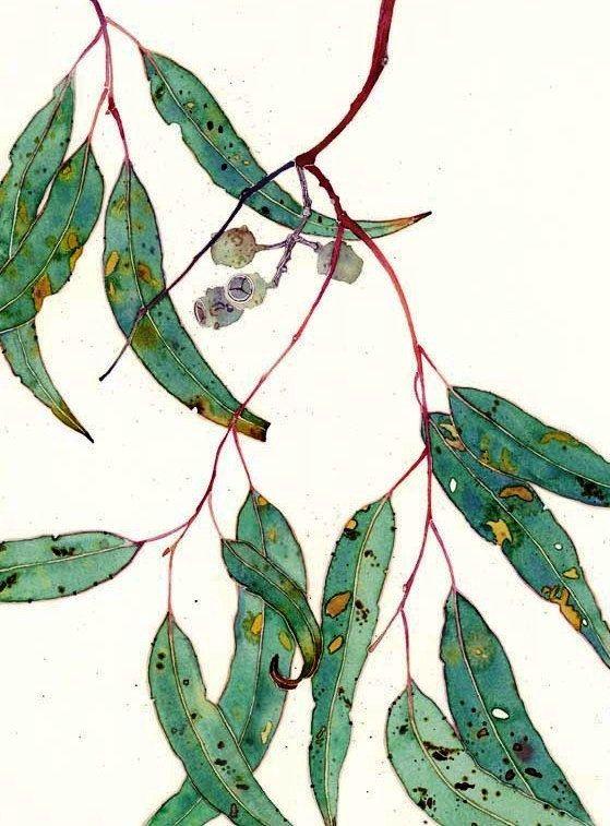 Gum leaves watercolour blank C6 greeting card by GabbyMalpas, $4.00