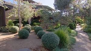 Natives plants clipped into balls using a fine sand or very small pea gravel as mulch.