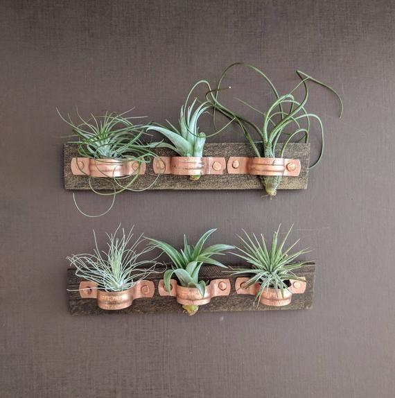 plaque murale de plante d air avec des d tenteurs de cuivre et trois plantes de l air