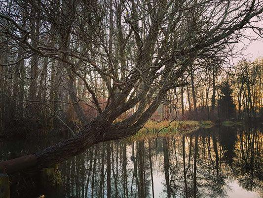 Lehder Graben im Spreewald