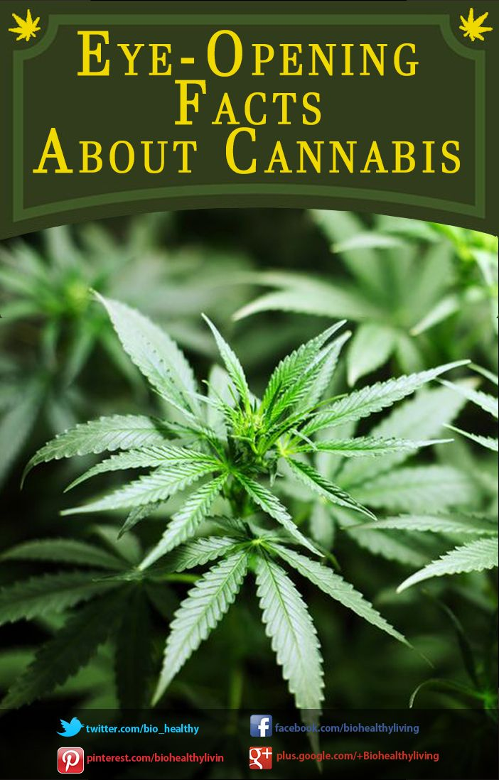 Eye-opening Facts about Cannabis   http://www.biohealthyliving.com