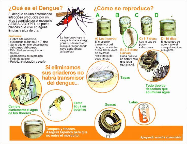 ¡Cuídate del dengue!