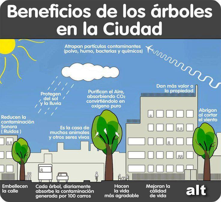 Beneficios de los arboles en la ciudad,