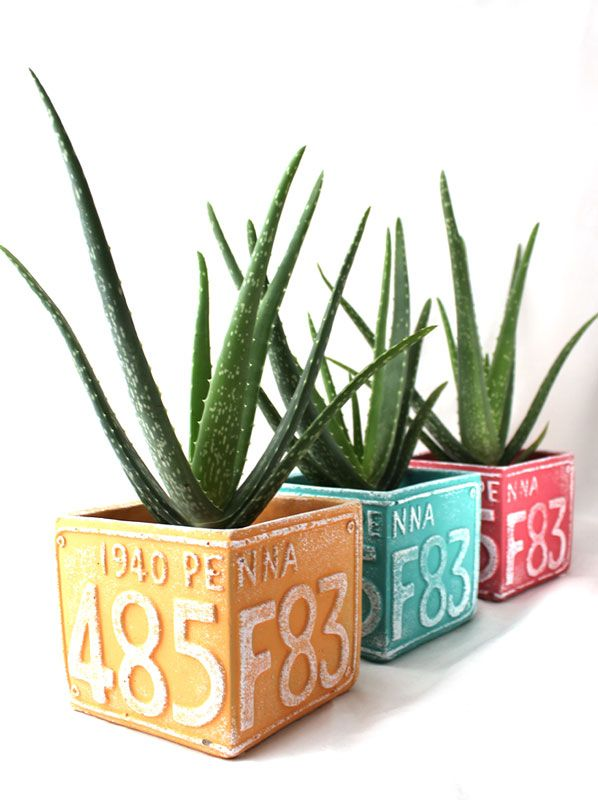 7 best les contes du rocher par les contes succulents images on pinterest succulents - Aloe vera en pot ...