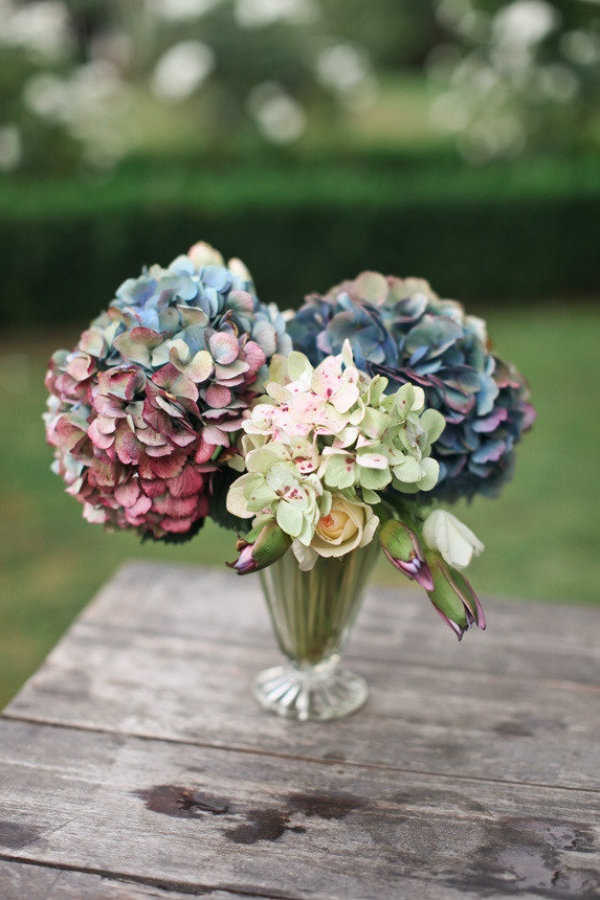 Best images about hydrangeas because my sister
