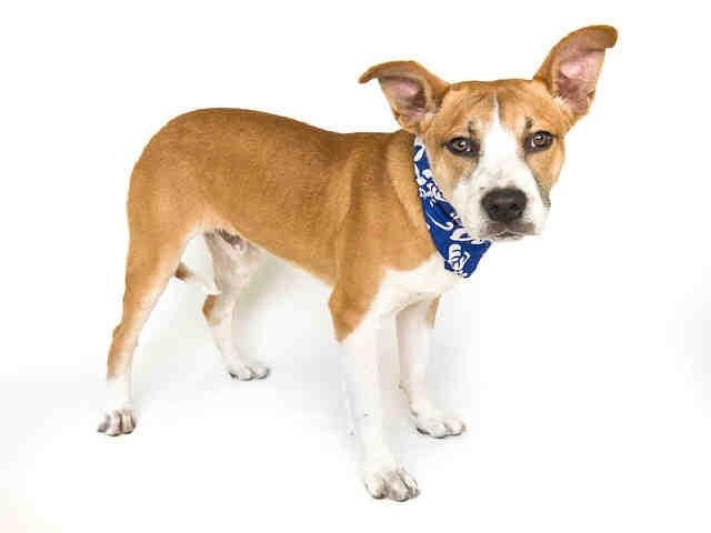 Orlando, FL: Orange County Animal Shelter, now available ...