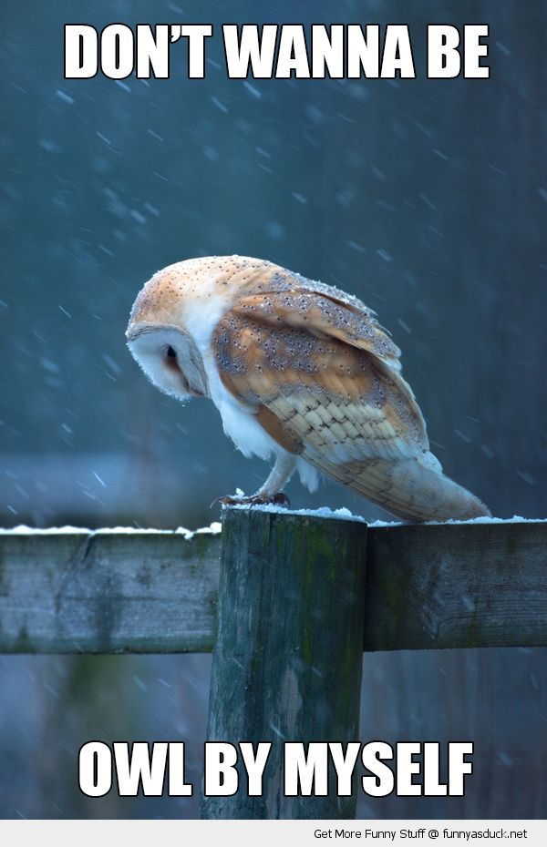 funny owl pictures | Playdom Forums • View topic - Shhh...I got a Secret