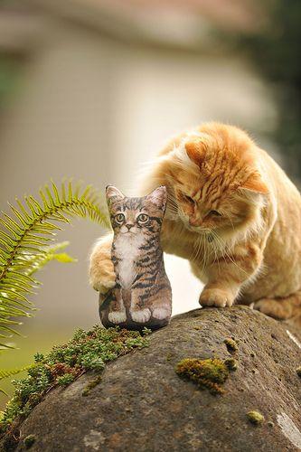 =^.^=: Orange Cat, Kitty Cat, Painting Rocks, Pets Rocks, Baby Animal, Baby Dolls, Gingers Cat, Kittens, Baby Cat