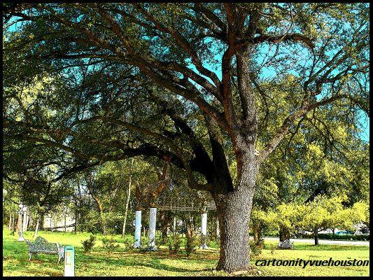 Big Old Live Oak Tree ~ Missouri City, Texas