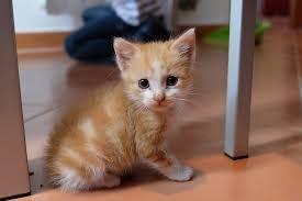 Výsledok vyhľadávania obrázkov pre dopyt mačiatka obrázky