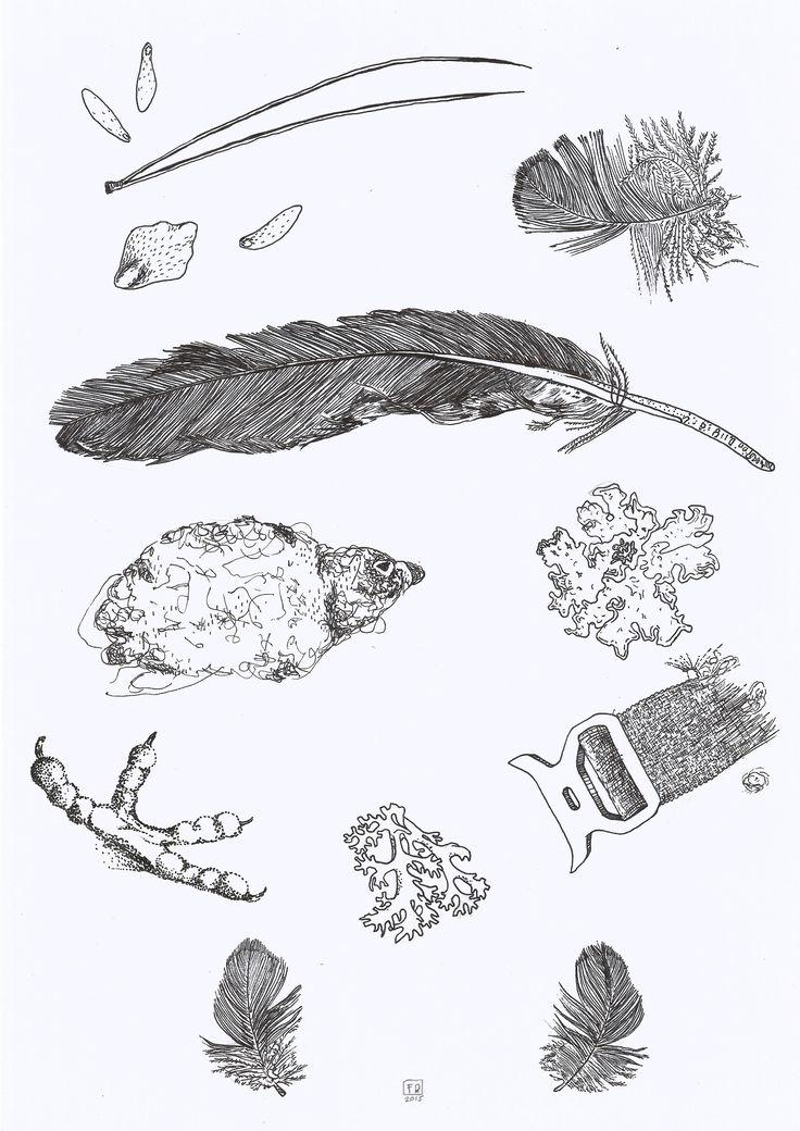 The kea  / inspiration bird animal design drawing feather lichen art /