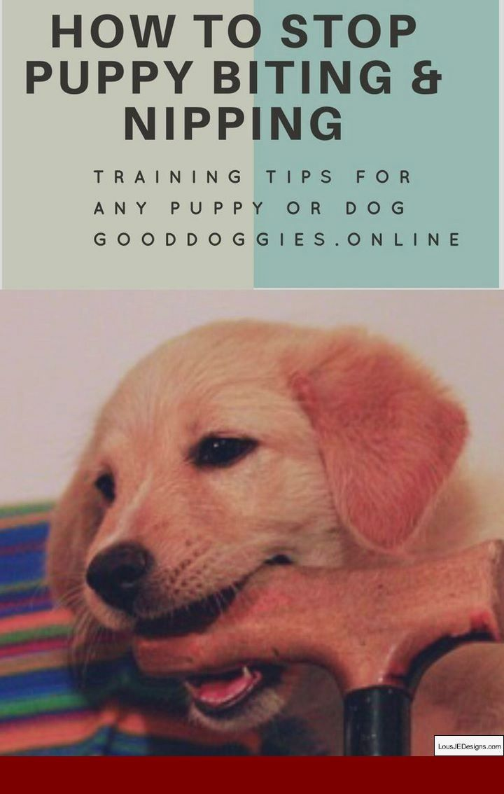 How To Train Your Dog Not To Bark In The House And Pics Of Potty