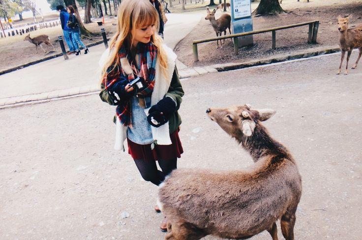 """Nous avions dû faire, ce jour-là, absolument tous les jeux de mots envisageables autour du mot """"deer"""", tout en chantonnant """"Biche, ô ma biche"""" de Frank Alamo entre nos dents, parce que nous n'en connaissions que les quelques premiers mots du refrain. L'un dans l'autre, c'était une excellente journée.    Nara, Japon 34.3202047, 135.3242871"""