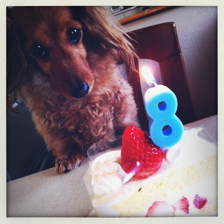 03 - Happy Birthday COCOA!!!