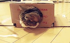 Katze<3