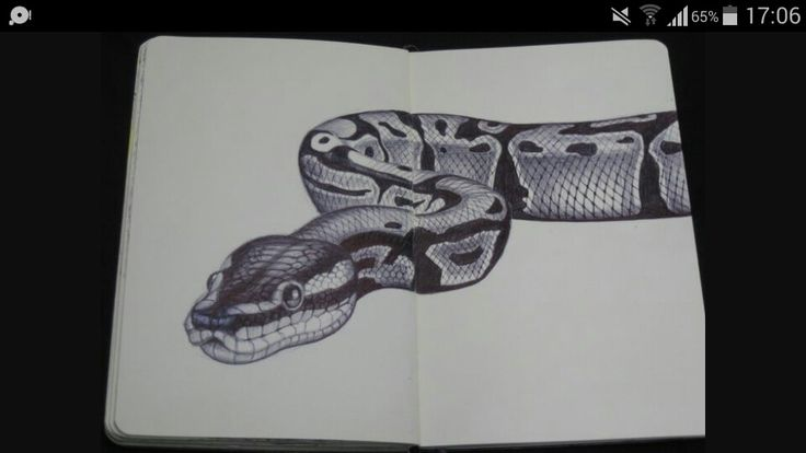 Realistic snake drawing #sketchbook                              …