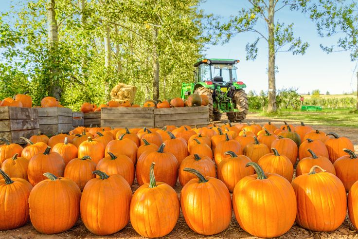 Little Known Pumpkin Facts - Farmers' Almanac - What do pumpkins have to do with freckles and snakebites? What state grows the most pumpkins annually? We have the answers! #pumpkins #facts