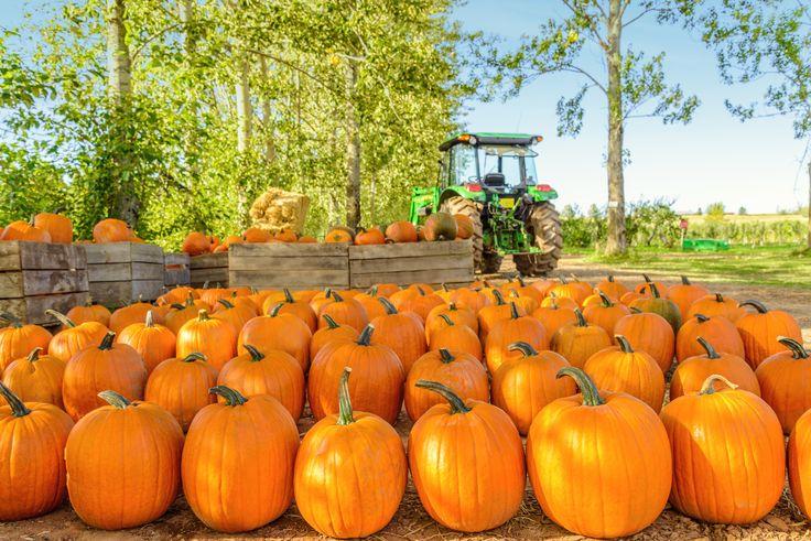 Little Known Pumpkin Facts - Farmers' Almanac
