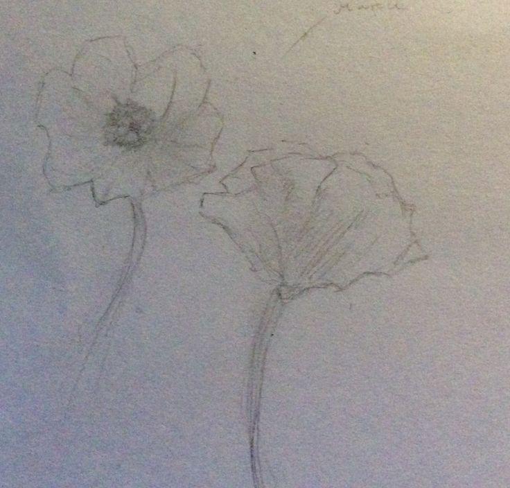 Poppу flowers sketch.