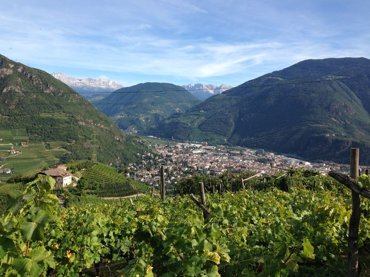The #Dolomites in the background: #Rosengarten and #Latemar #Rottensteiner #winery #wine #winelovers #SouthTyrol