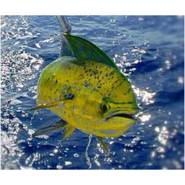 17 best images about dan 39 s board on pinterest hawaiian for Shore fishing maui