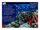 Project this science mini-lesson on your whiteboard to teach kids about the characteristics of the different ocean zones. This is a great introductory resource for an ocean unit! View it here: http://www.teachervision.fen.com/oceanography/mini-lesson/71857.html