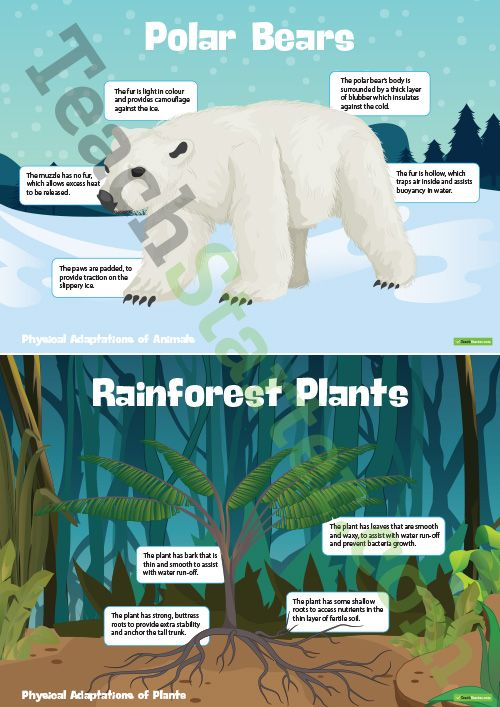Physical Adaptations Of Plants And Animals – Posters Teaching Resource