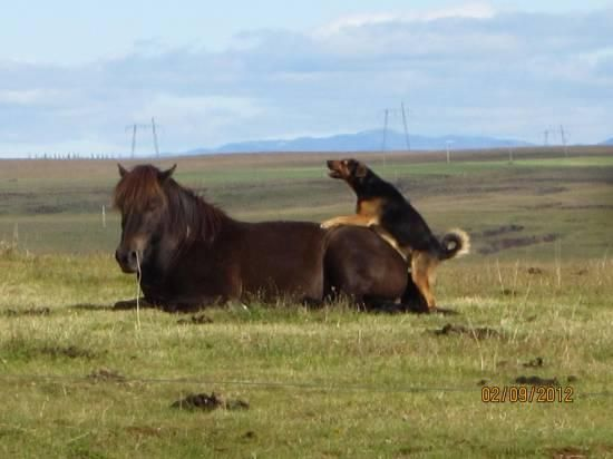 Went out to round up our horses with my dog... can't say it went quite as planned: Animals, Dogs, Horses, Funny Pictures, Funny Stuff, Funnies, Humor, Photo