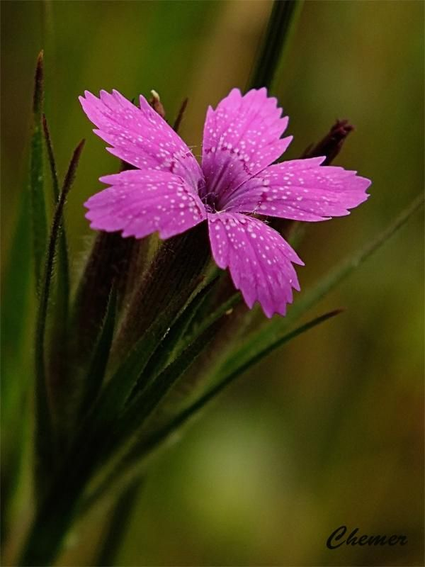 ANGIOSPERMAS-Tienen flores y producen frutos que contienen las semillas. Las flores pueden ser grandes y vistosas. Pueden ser hierbas, arbustos o árboles de hoja caduca o perenne