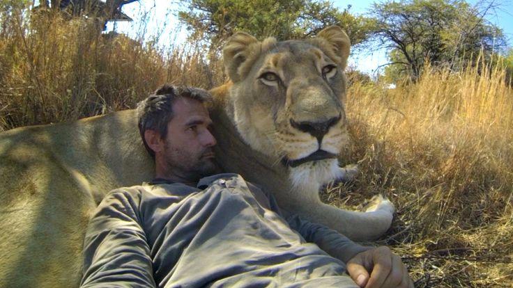 Un homme fait des calins à des lions en GoPro | Vidéos de chats !